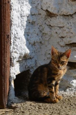 gato-alpujarreño